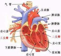 冠状动脉性心脏病