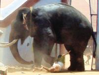 屋顶的大象在线播放版