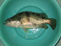 一个生物教师犯下的低级错误 - 东流水 - lxd4518 的博客
