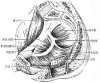 肛乳头瘤图片