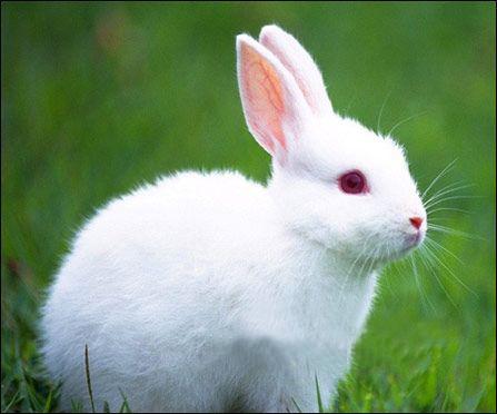 兔_兔子摄影图__家禽家畜