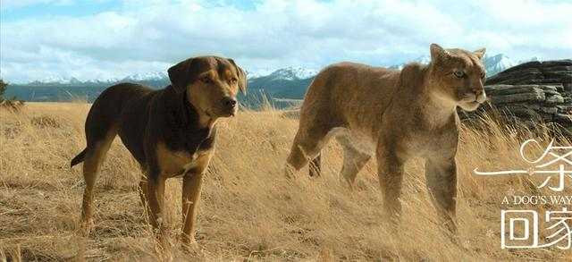 《一条狗的回家路》:再次温情上演