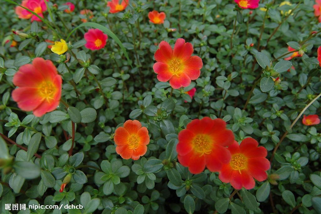 [转] 转载:开花植物花色归类 [图片]  转 - 冰魂 - wawawawoomlibo 的博客