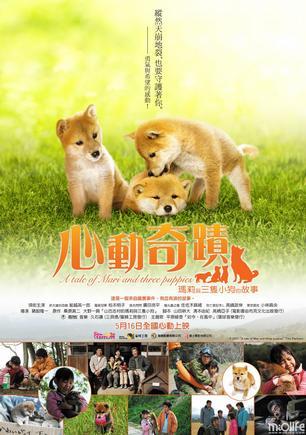 推荐一部感人的关于义犬的日本电影《心动奇迹》