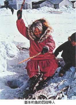 爱斯基摩人(eskimo)