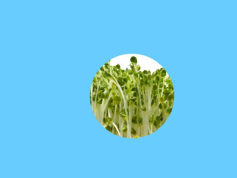绿豆在发芽过程中,维生素c会增加很多,而且部分蛋白质也会分解为各种