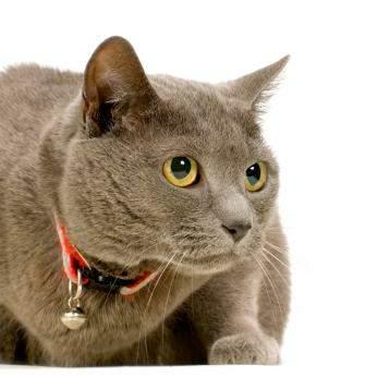 夏特尔猫图集