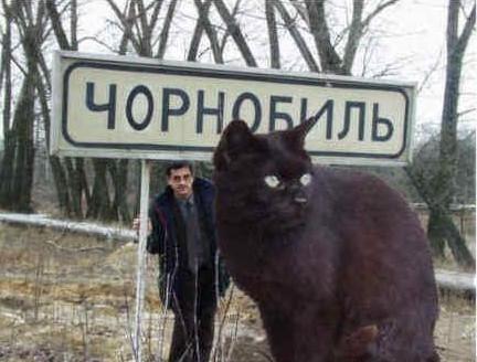 乌克兰巨猫angie_乌克兰巨猫