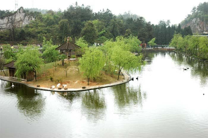 贵阳森林野生动物园景点介绍图片