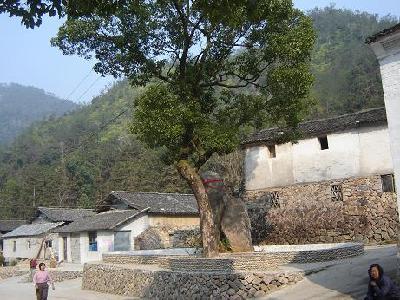 花坦乡风景图 温州市永嘉县花坦乡小溪村 高清图片