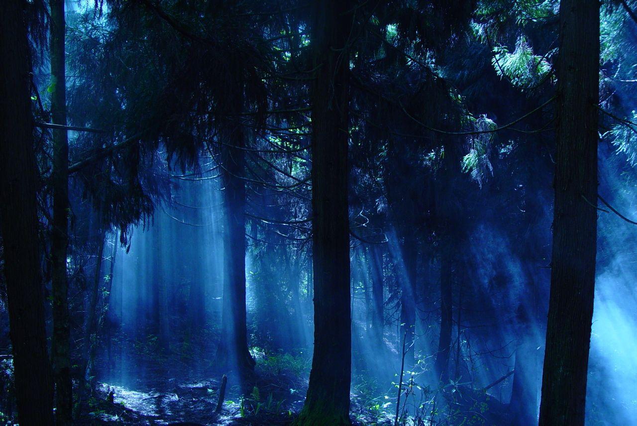 丛林无边剧照
