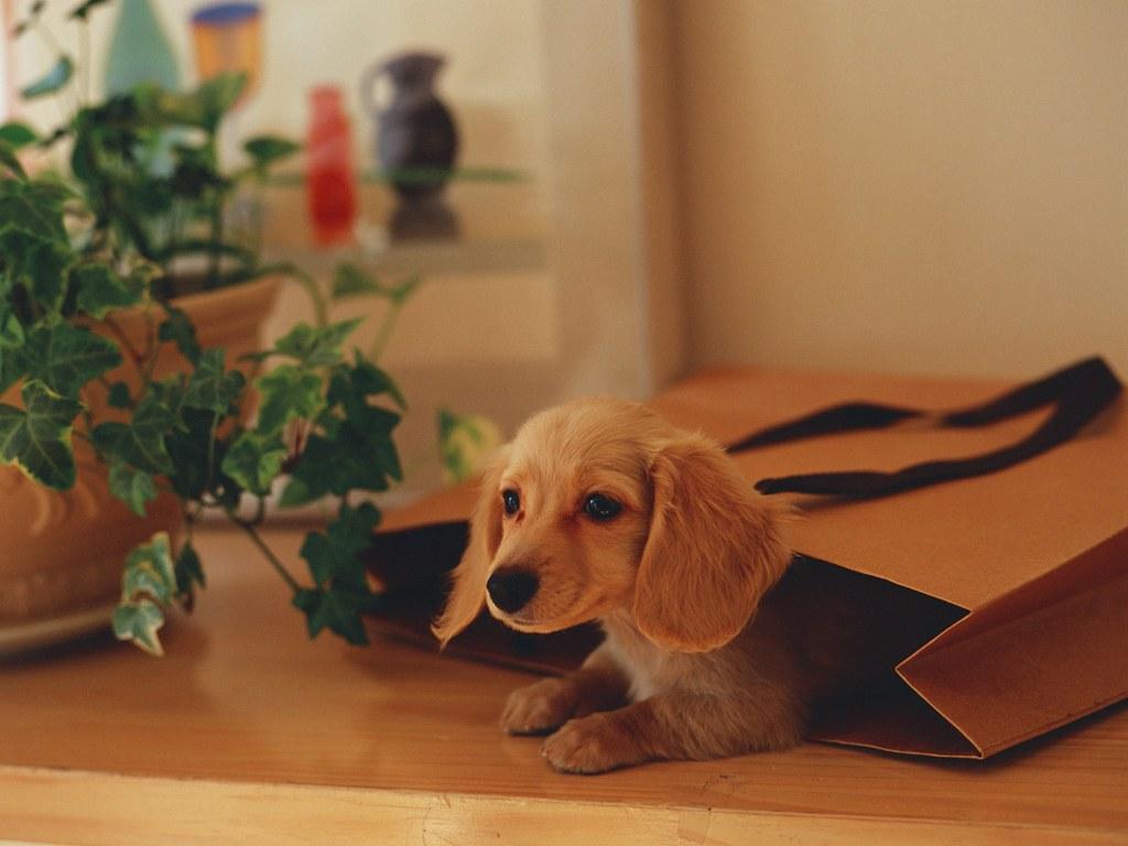 图片素材网,小狗小猫图片,小狗图片下载 高清图片