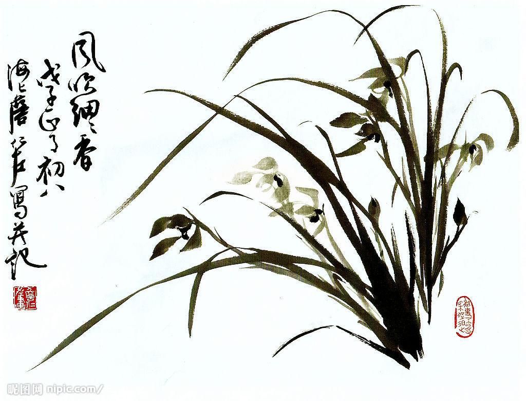 国画兰花_兰花