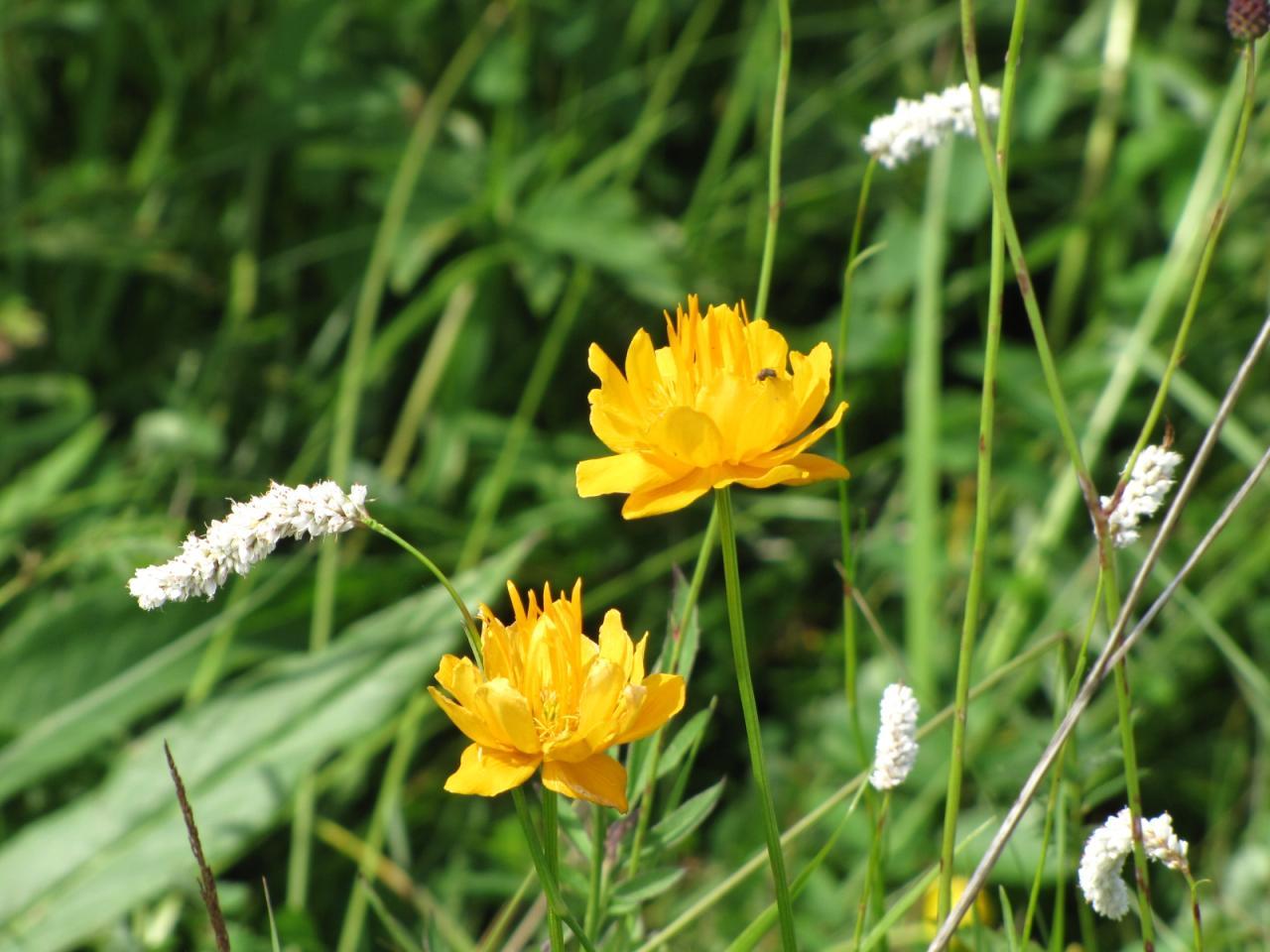 鄂尔多斯大草原图片