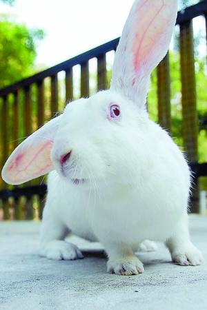 大灰兔在线观看