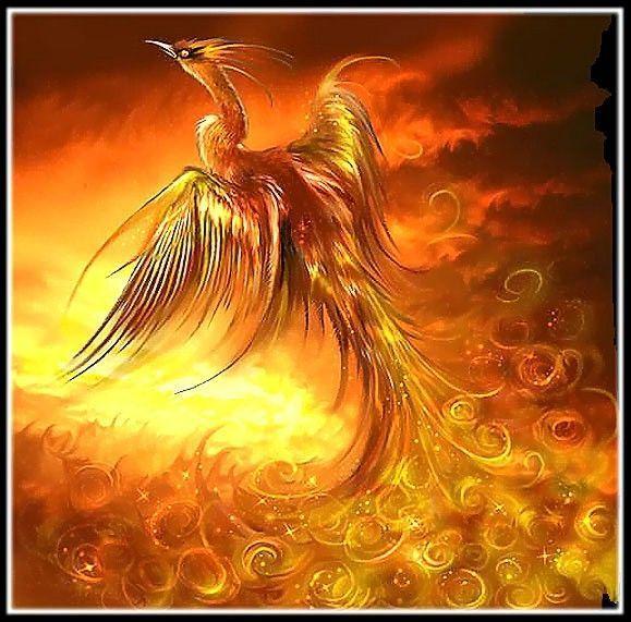 女主穿越到火凤凰世界