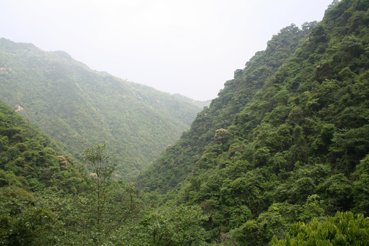 大田县广平镇北洋绮森林公园词条图册_百度百科图片