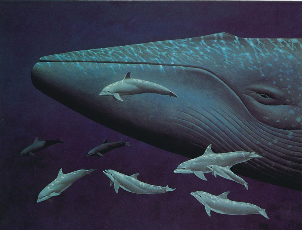 图片偷拍亚_鲸目之下又区分为两个亚目,分别是须鲸亚 目(subordermysticeti