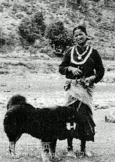 1933年藏獒老照片