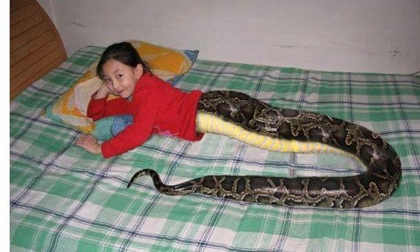 和美女蛇明天登场