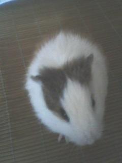 好事家里养的白老鼠