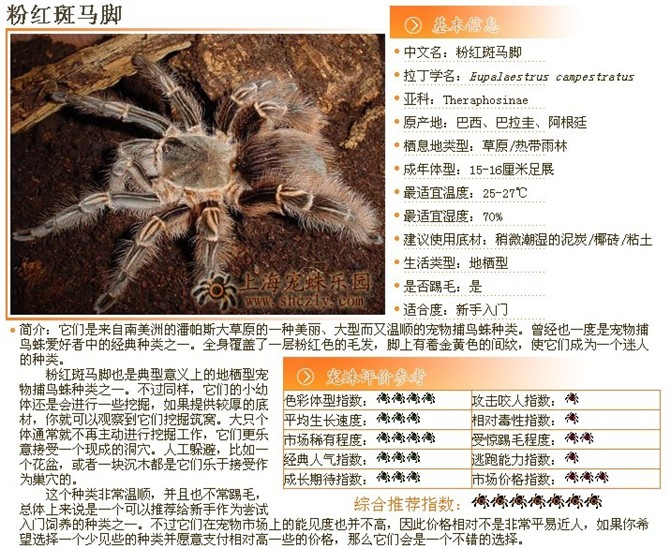 772 魔卡 幻想 卡 牌 图鉴 之 蜘蛛 人 女王 252 400 蜘蛛 ...
