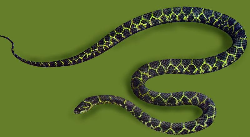 中国蛇类图谱