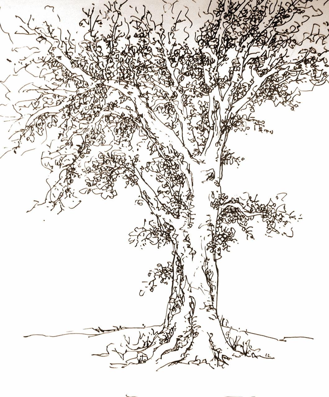 简笔画 手绘 线稿 1059_1280图片
