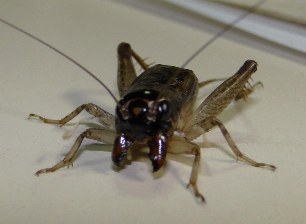 多发帖子可以的看看虫王吧大家 - 蟋蟀论坛 - 中国网