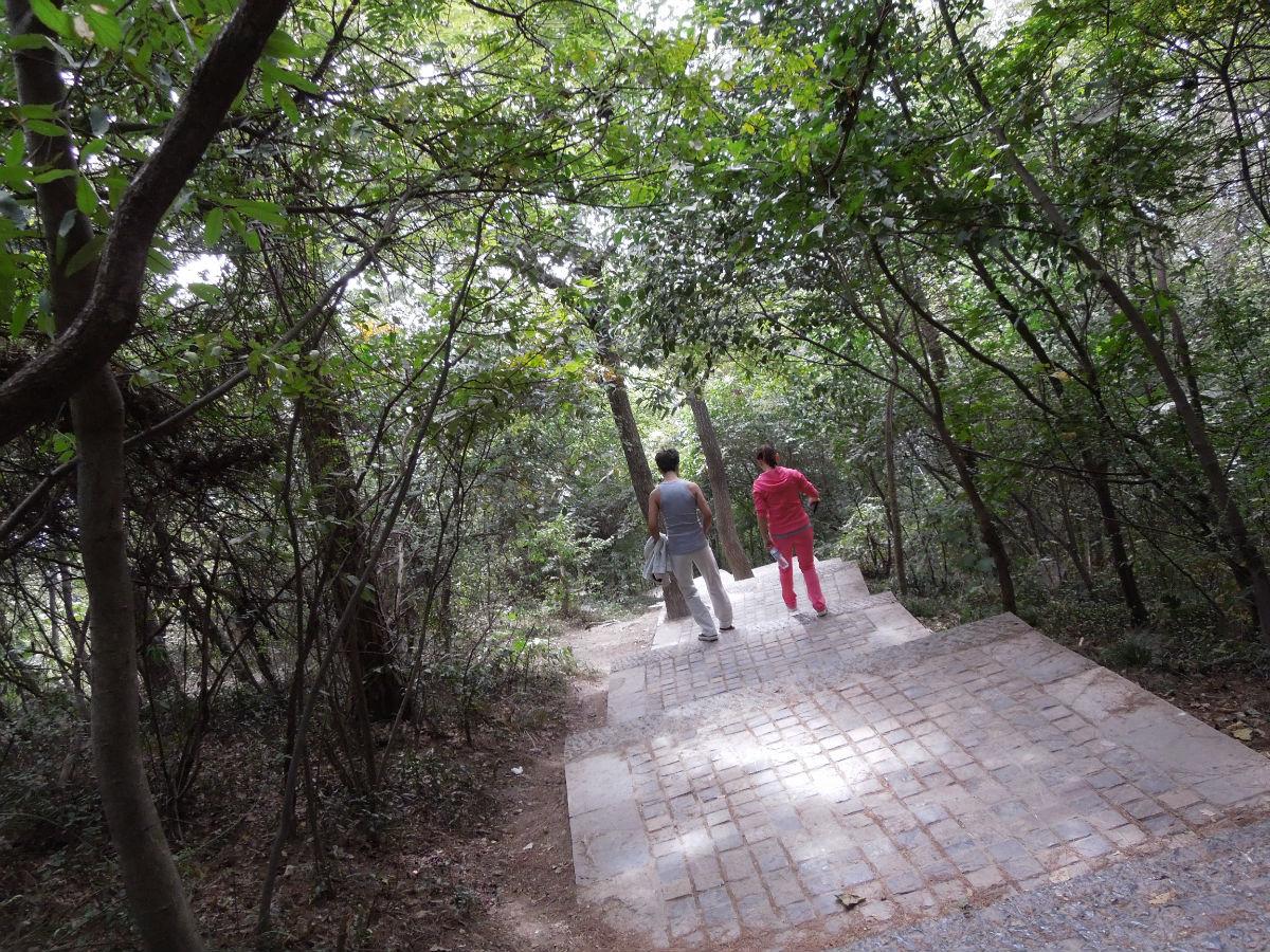 竟然发现一对男女在树林里野战图片