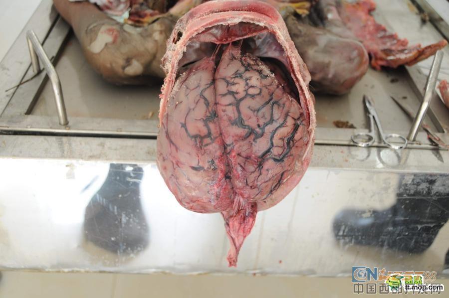 【解剖】你喜欢看吗?如果喜欢