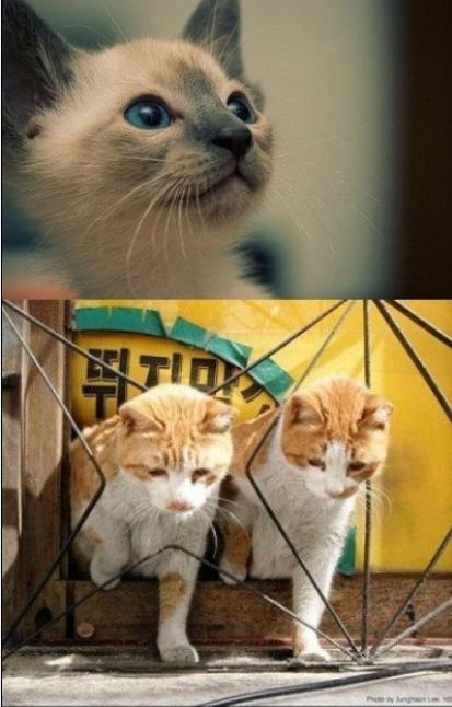 萌猫表情包冷笑分享展示图片