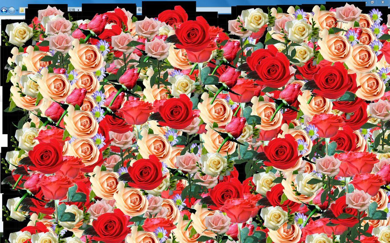瞬间-让电脑桌面开满9999朵玫瑰花-小软件图片图片