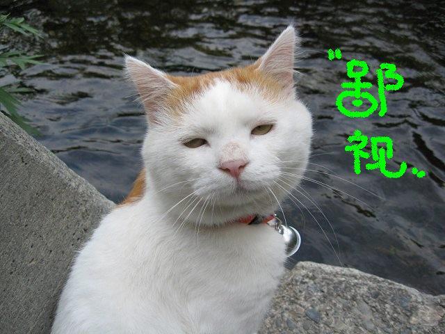 qq表情_猫叔吧_百度贴吧图片