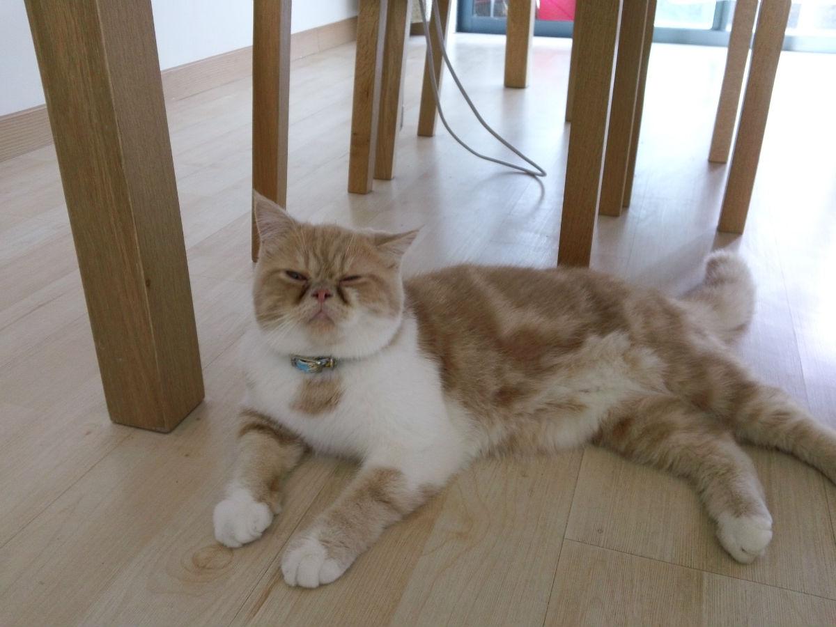 壁纸 动物 猫 猫咪 小猫 桌面 1200_900图片