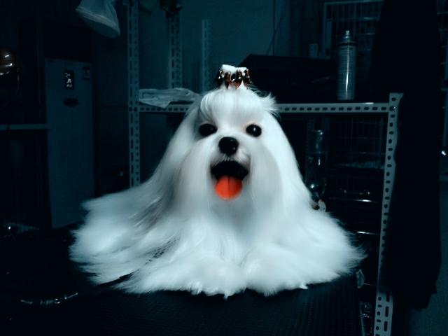 名侦探柯南炎之魔犬