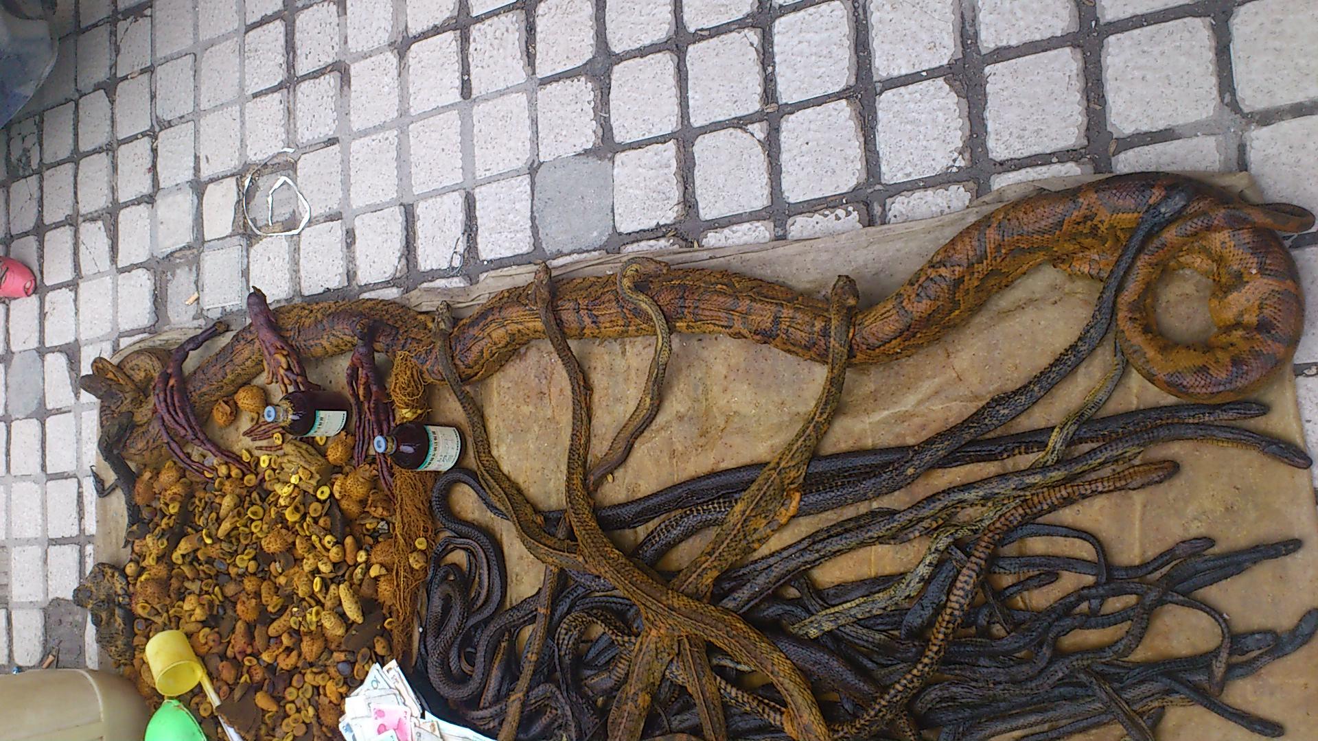 赤水市区惊现3米长巨莽,和百条1米长小蛇,有图有真相 精 高清图片