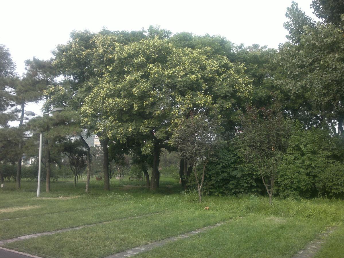 的,草皮砖谁认识,这是什么树?位于龙泽路上的唐山博物馆正门高清图片