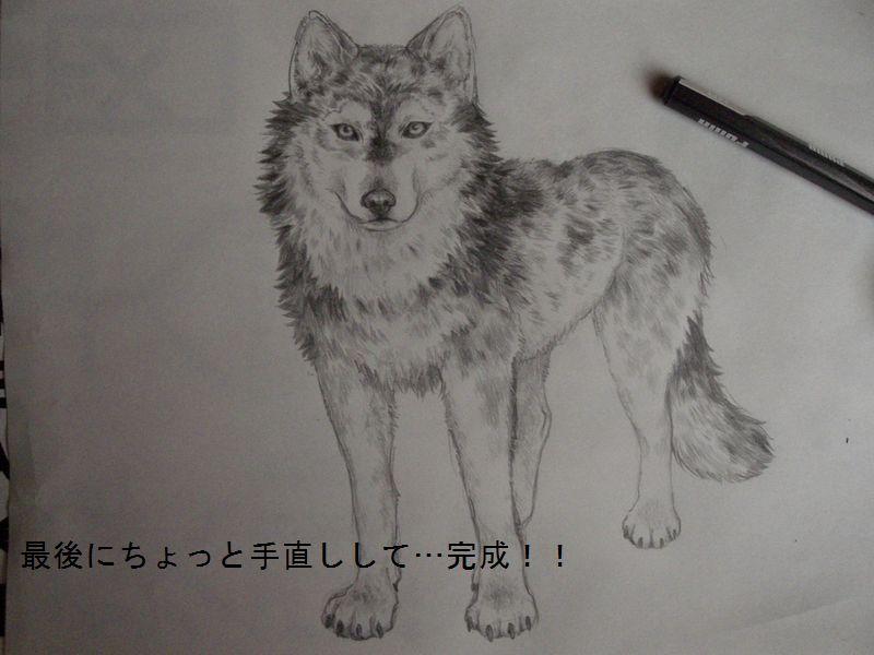 括头像狼素描_狼的头像素描简笔_动物头像素描等,最好看的头像狼素图片