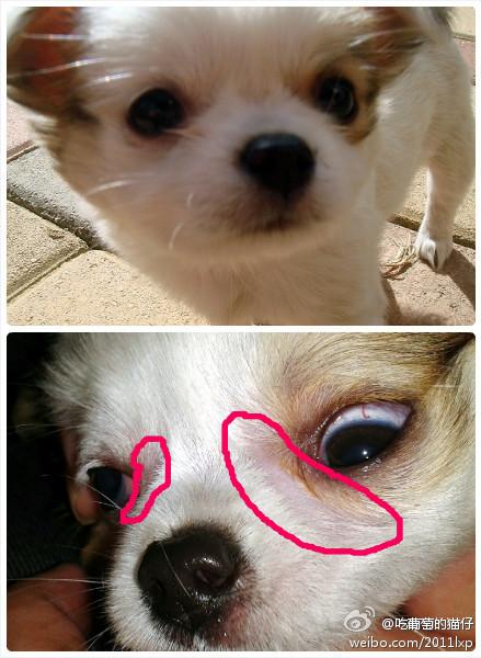 狗鼻子干用什么药