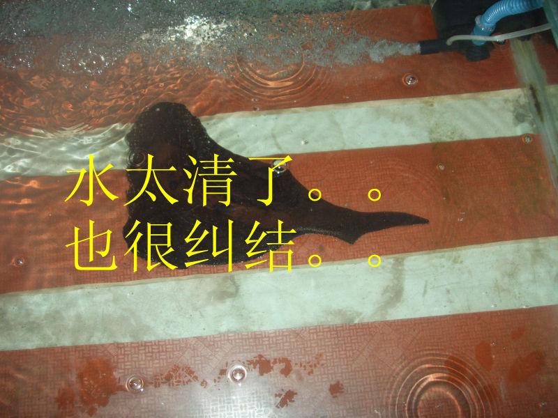 乌龟 底-底滤鱼缸过滤系统图 撤滤鱼缸过滤系统图 鱼缸底过滤系统