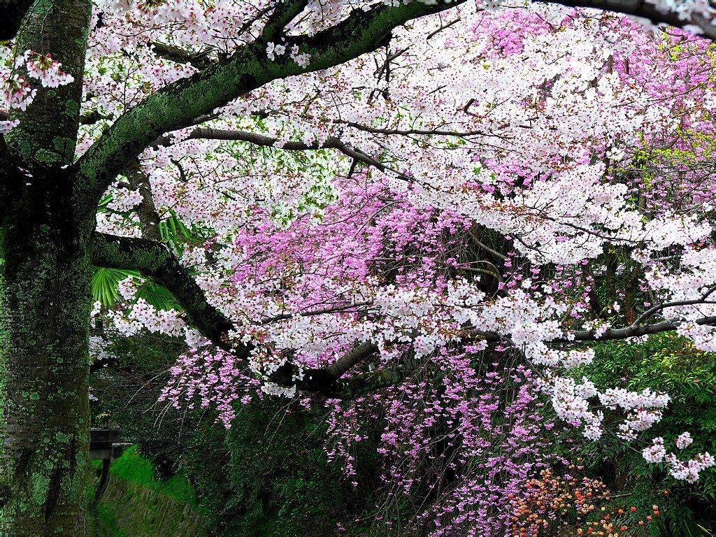 你最喜欢的描写春天的古诗图片