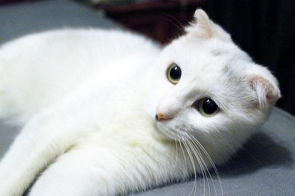 萌猫表情包壁纸分享展示图片