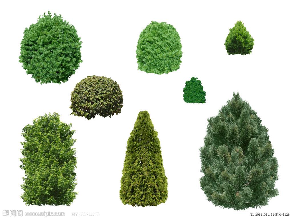 园林树木种子图片