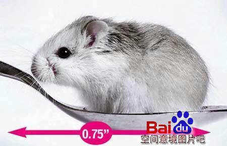 可爱的鼠狐猴_________ 呀.好可爱