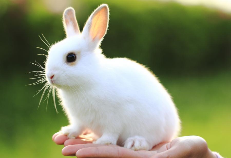 【小白兔细节描写】
