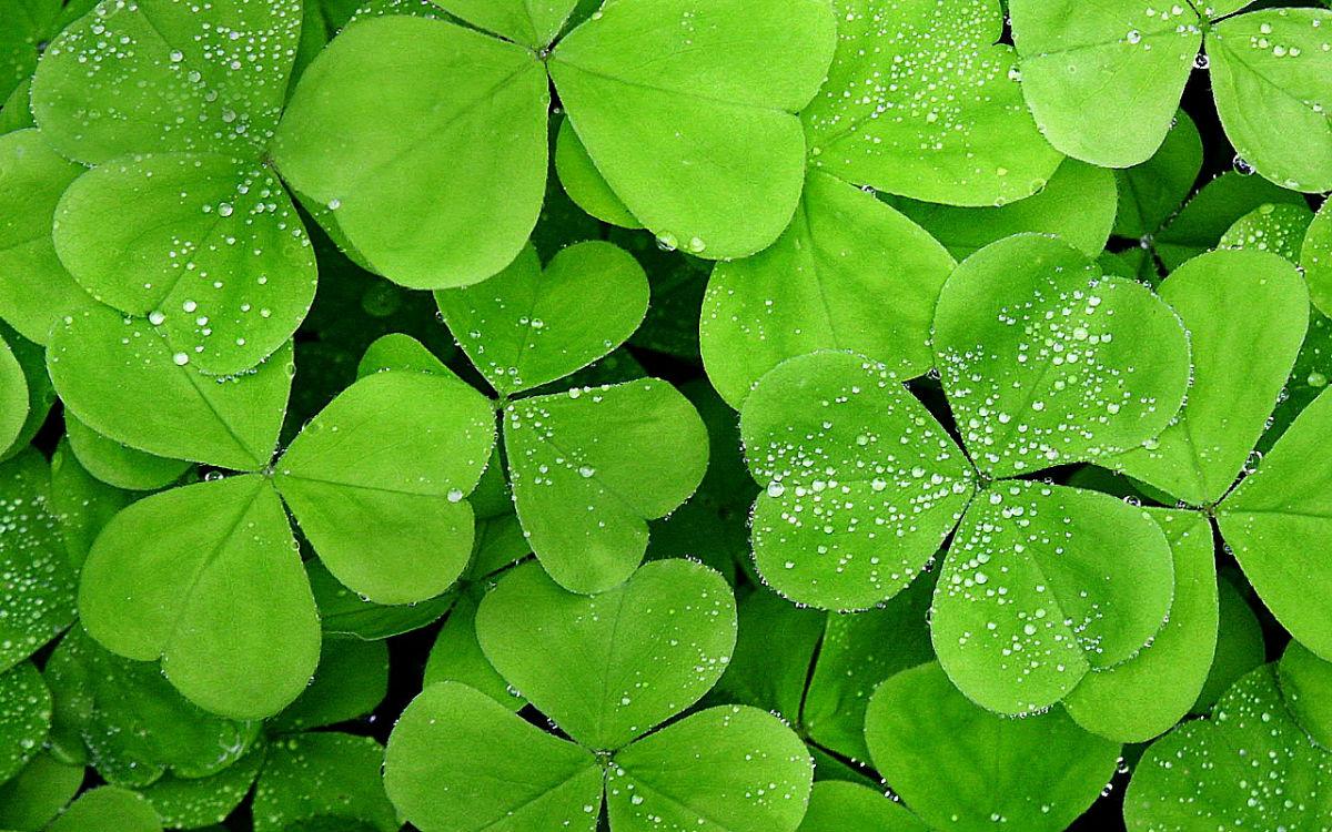 超清绿色养眼壁纸_5d超清护眼桌面壁纸_超清绿色山水养眼壁纸图片