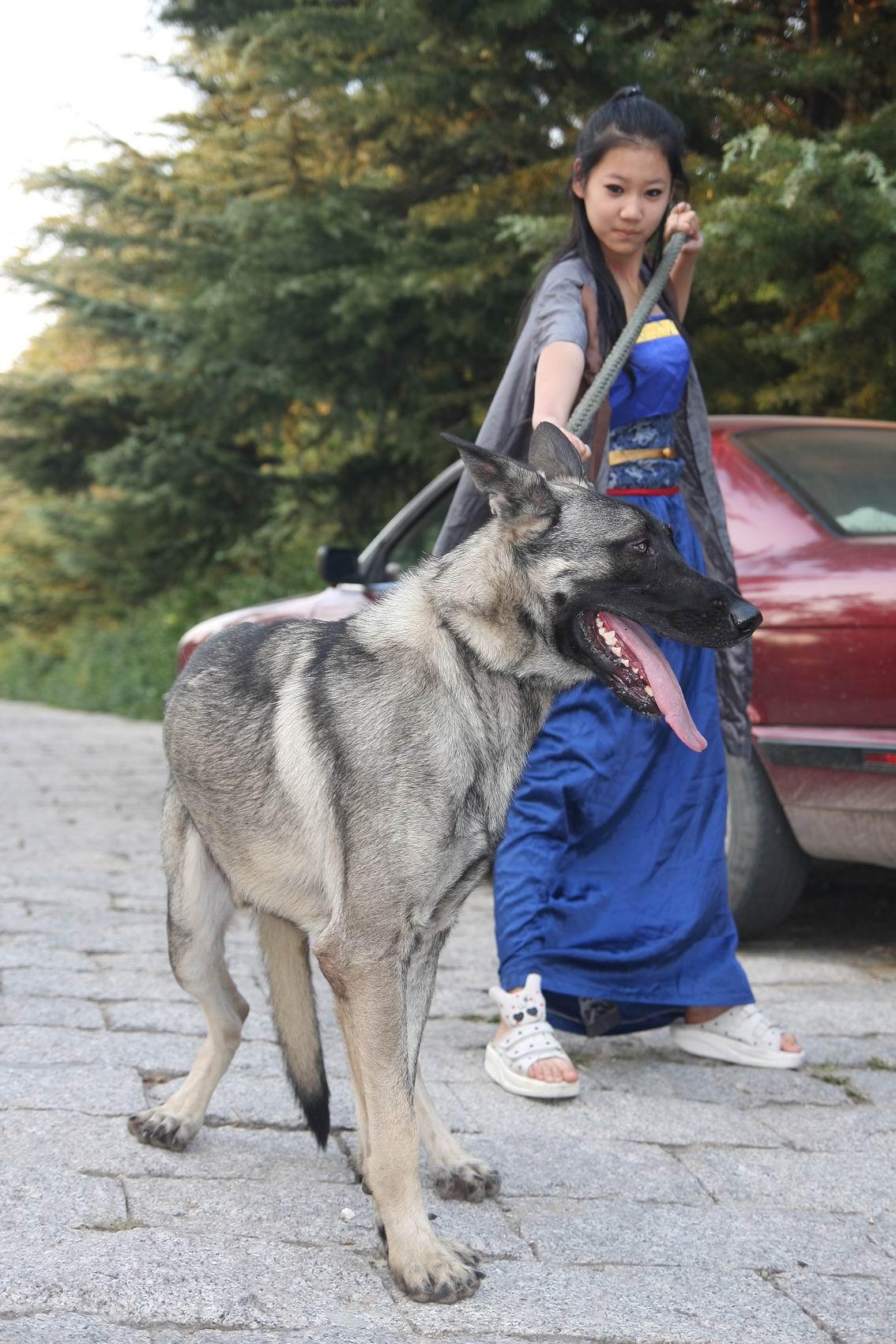 美女和野兽 狼青吧