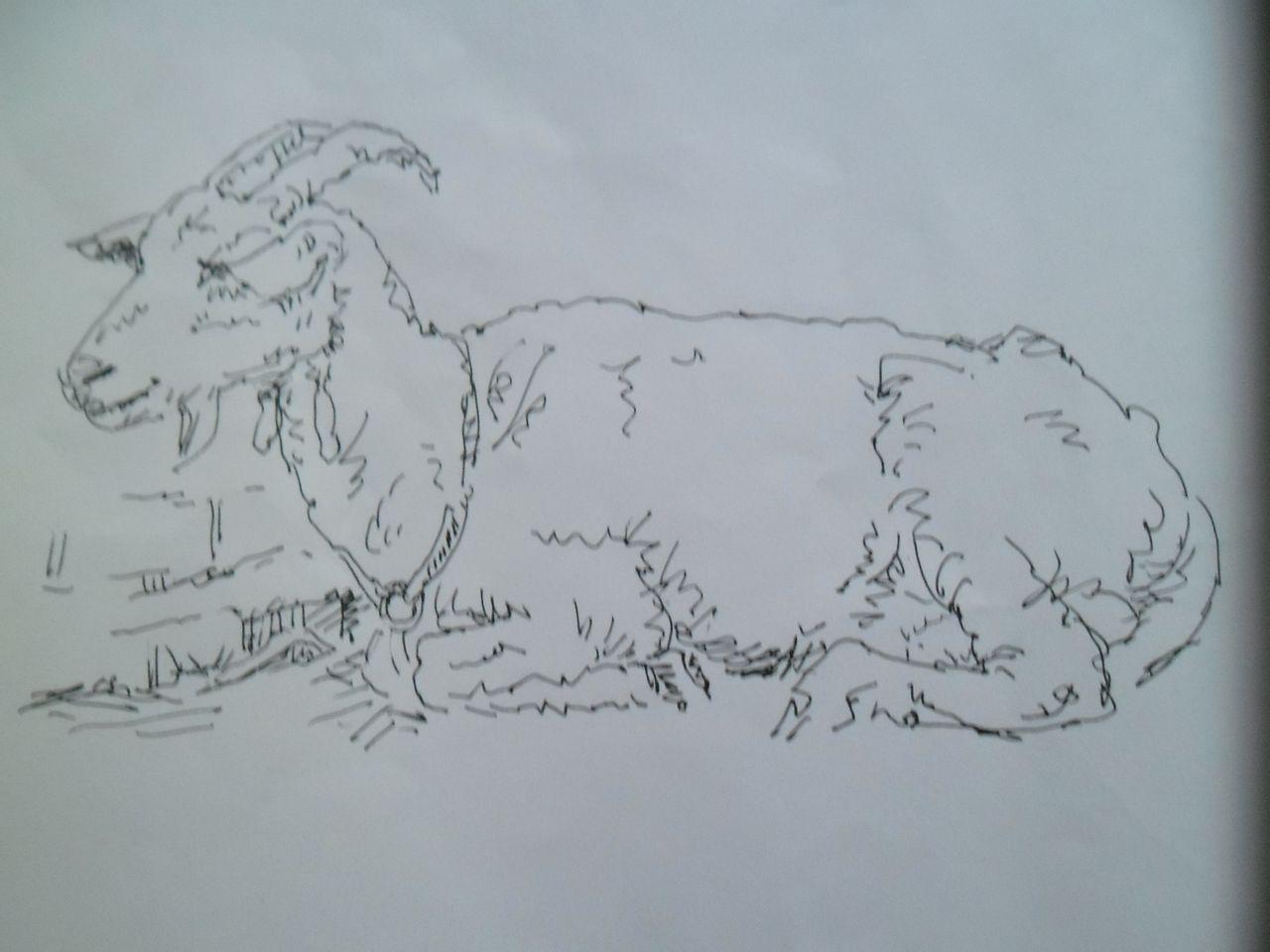 我的动物速写图片
