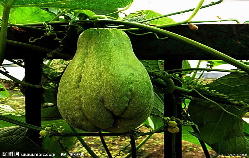 蔬菜图片大全及名称图片